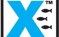 fish dynamix logo